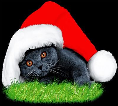 ลายสกรีนฮาฟโทนแนวแมว
