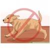 วิธีการดูแลน้องหมาที่เป็นโรคข้อสะโพกเสื่อม