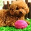 ของเล่นสุนัข บอลยางรักบี้สีฟ้า