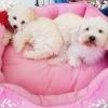 เบาะนอนสุนัขและแมวสีชมพู