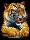 ลายสกรีนฮาฟโทน แนวเสือ