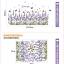 สติ๊กเกอร์ลาเวนเดอร์ a636 thumbnail 7