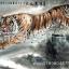 ภาพเสือท่องราตรี 50*100cm cnn17 thumbnail 2