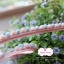 ลูกไม้ตุ้มเล็ก สีชมพูโอรสสลับฟ้า แบ่งขายเปนหลา thumbnail 2