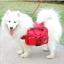 Dog Backpack สำหรับสุนัขเดินทางสีแดง thumbnail 2