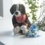 ผ้าพันคอสุนัขและแมว S (ราคาพิเศษ+คลิกดูราคาด้านใน) thumbnail 1