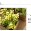 กระถางดอกไม้ปลอม สูง15cm Tree10 thumbnail 18