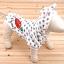 เสื้อสุนัขแครอทเทา (ไซส์ S,XXL) thumbnail 1