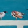 นกนางนวล สีอะคริลิค Seagull Acrylic color