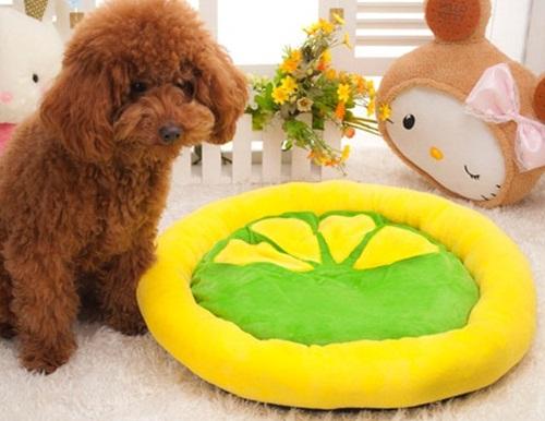 เบาะนอนสุนัขและแมวรูปผลไม้ไซส์ใหญ่