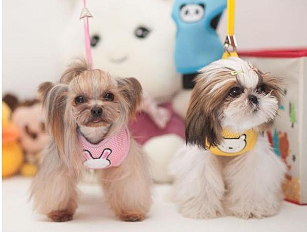 เสื้อรัดอกสำหรับสุนัข พร้อมสายจูง (ไซส์ S สีชมพู)