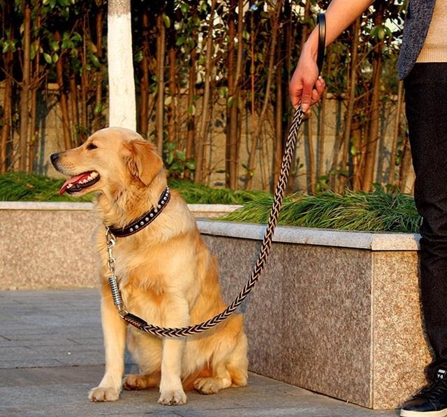 ชุดสายจูงพร้อมปลอกคอสำหรับสุนัข