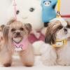 เสื้อรัดอกสำหรับสุนัข พร้อมสายจูง (ไซส์ L สีชมพู)