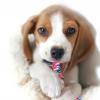 ของเล่นสุนัข เชือกฝ้าย (10 ชิ้น 182.-)