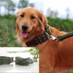 ชุดสายจูงพร้อมปลอกคอสำหรับสุนัข (ส่งฟรี)