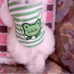 เสื้อกล้ามสุนัขลายกบเขียว
