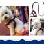 ชุดสายจูงสุนัขพร้อมที่รัดอก (ส่งฟรี) thumbnail 1