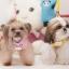 เสื้อรัดอกสำหรับสุนัข พร้อมสายจูง (ไซส์ S สีชมพู) thumbnail 1